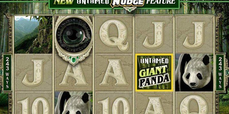Untamed – Giant Panda