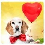 Rizk og Guts Casino med Valentines Realspins – Hjertelig hilsen Lucky